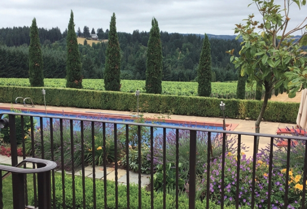 Alloro Vineyard Grounds